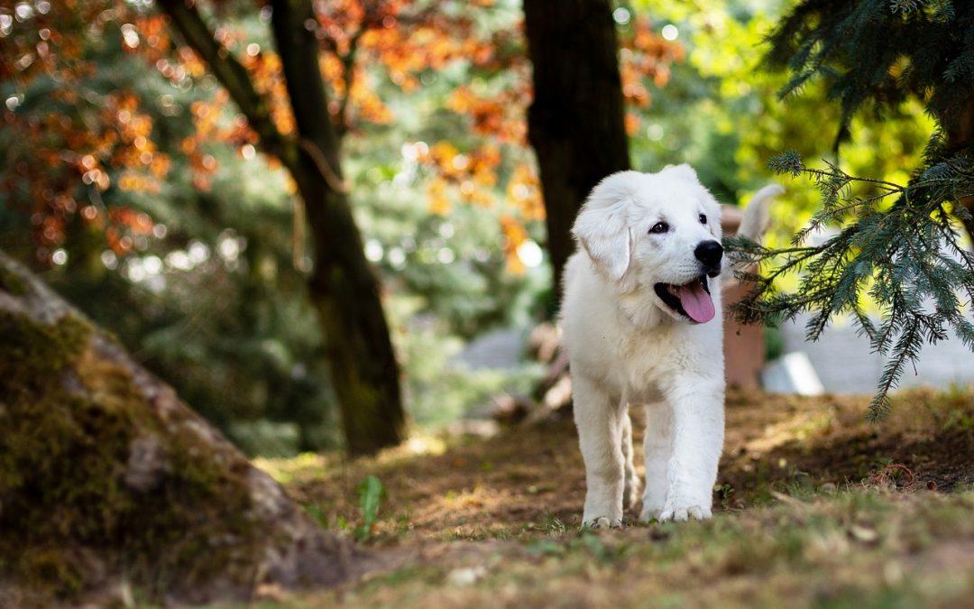 """Os animais têm emoções e """"caminham"""" conosco na jornada evolutiva!"""